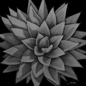 agave_2