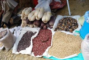 maiz-mexicano