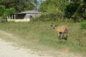 Foto Comunidad de la Selva Lacandona, Chiapas. Licencia CC