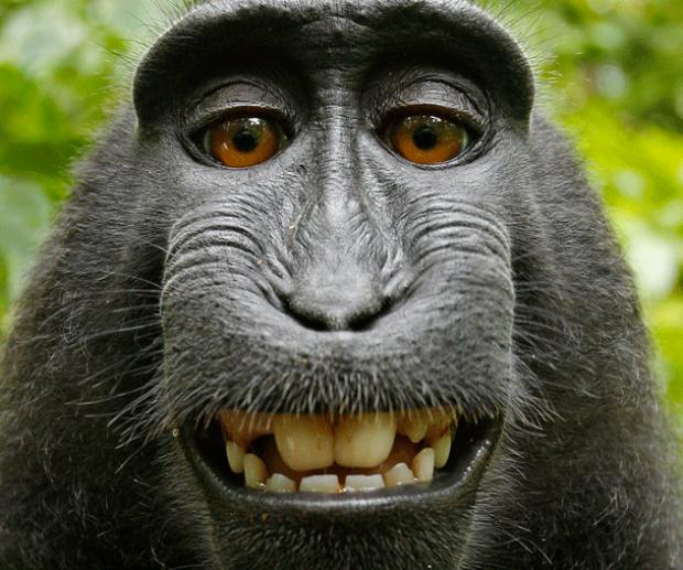 selfie-macaco